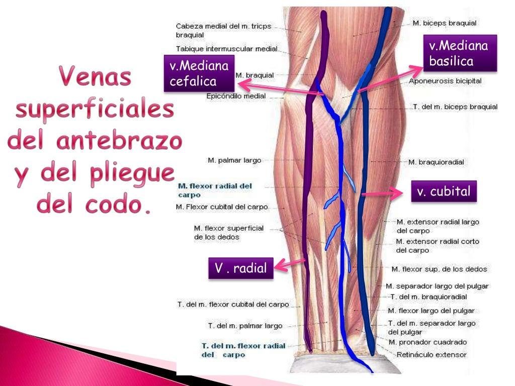 Excepcional La Extremidad Inferior De Ultrasonido Anatomía Venosa ...