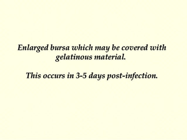 Indirect Serological Identification 1-Immunofluorescence: This is dependent on the examination of smears of cryostat secti...