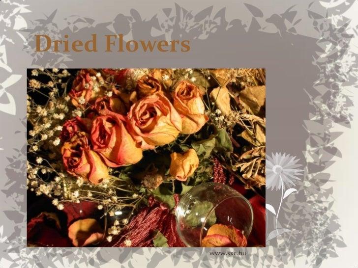 Dried Flowers<br />www.sxc.hu<br />
