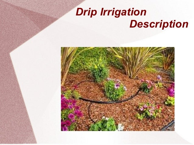 Drip Irrigation System Slide Share