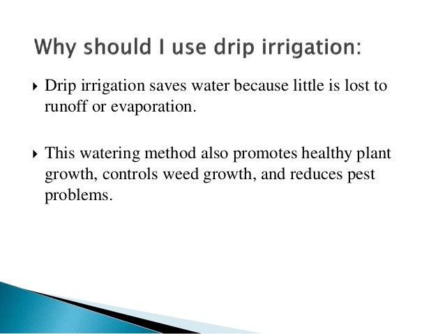  Drip irrigation saves water because little is lost to runoff or evaporation.  This watering method also promotes health...