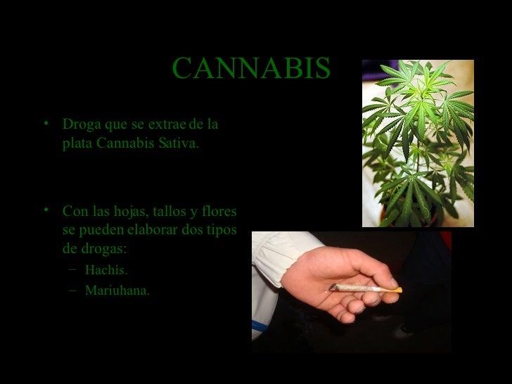 CANNABIS  <ul><li>Droga que se extrae de la plata Cannabis Sativa. </li></ul><ul><li>Con las hojas, tallos y flores se pue...