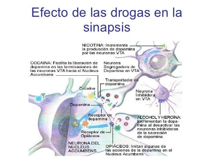 Efecto de las drogas en la sinapsis