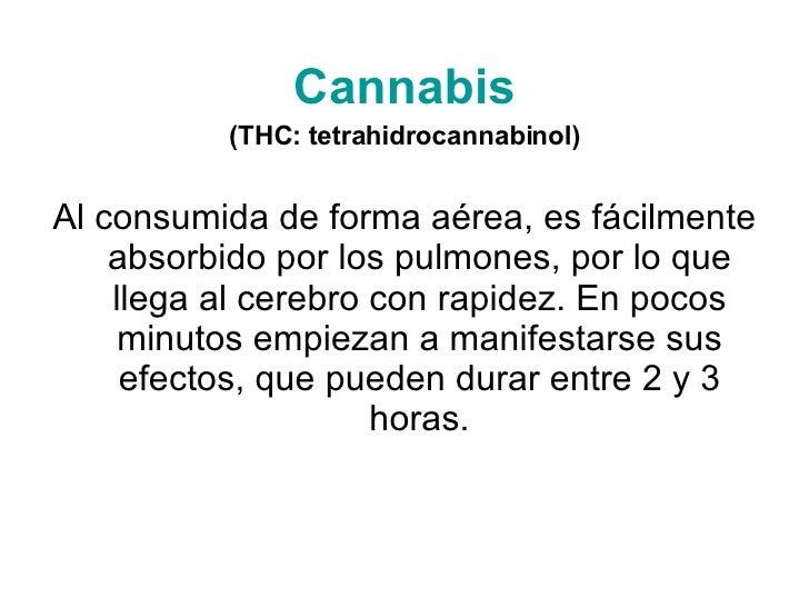 Cannabis (THC: tetrahidrocannabinol) Al consumida de forma aérea, es fácilmente absorbido por los pulmones, por lo que lle...