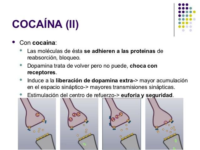COCAÍNA (III)   La estimulación del centro de refuerzo, hace que    quieras repetir esa sensación una y otra vez.   El u...