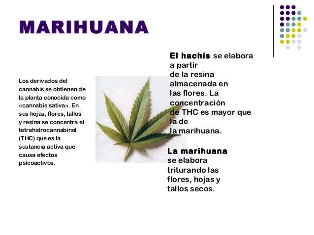 THCLa marihuana es unadroga depresora delSistema Nervioso Central,tiene decenas deelementos psicoactivos, elmás potente el...