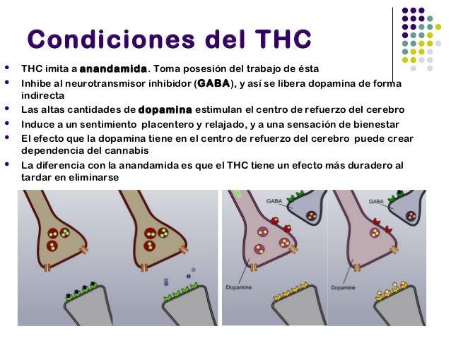 Otras consecuencias    Memoria a corto plazo (hipocampo)    Hambre (hipotálamo)    Coordinación y equilibrio (cerebelo)...