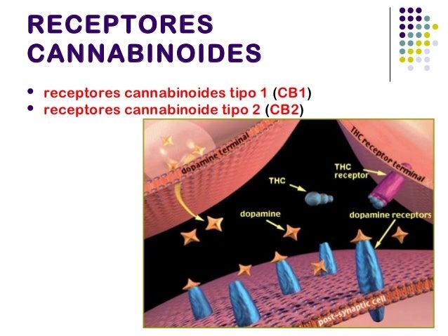 Antagonista del receptorCB1: RIMONBANT oSR141716  Algunos investigadores han alegado que la falta de síndrome de abstineci...