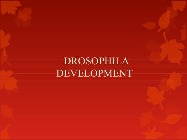 DROSOPHILA DEVELOPMENT