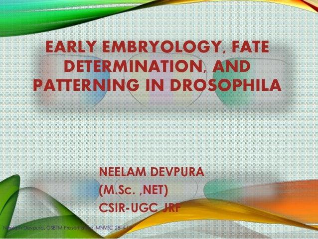 EARLY EMBRYOLOGY, FATE DETERMINATION, AND PATTERNING IN DROSOPHILA NEELAM DEVPURA (M.Sc. ,NET) CSIR-UGC JRF Neelam Devpura...