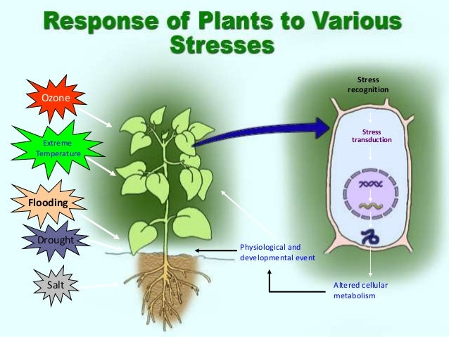 Drought stress Effects and Breeding Strategies