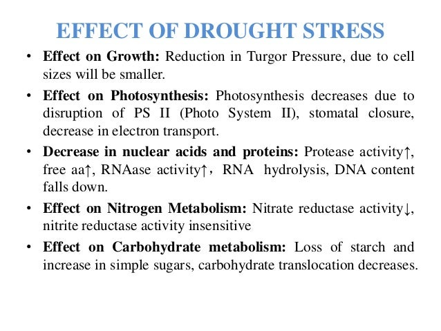 Drought Tolerance Agri Ppt