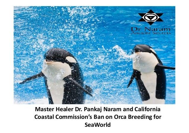 Master Healer Dr. Pankaj Naram and California Coastal Commission's Ban on Orca Breeding for SeaWorld