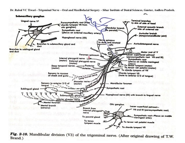 Dr Rahulvc Tiwari Diagrams Of Intracranial And Extracranial Course O