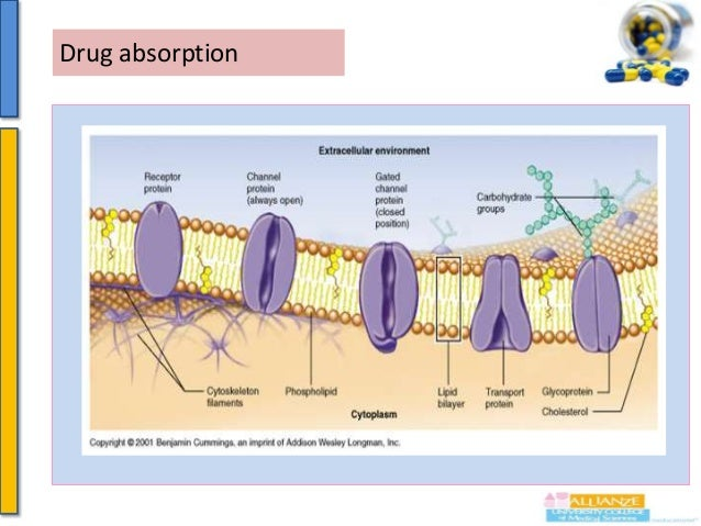 Drug absorption   Cell membrane consists ofLipid bilayer with Interspersed protein (islands of protein)