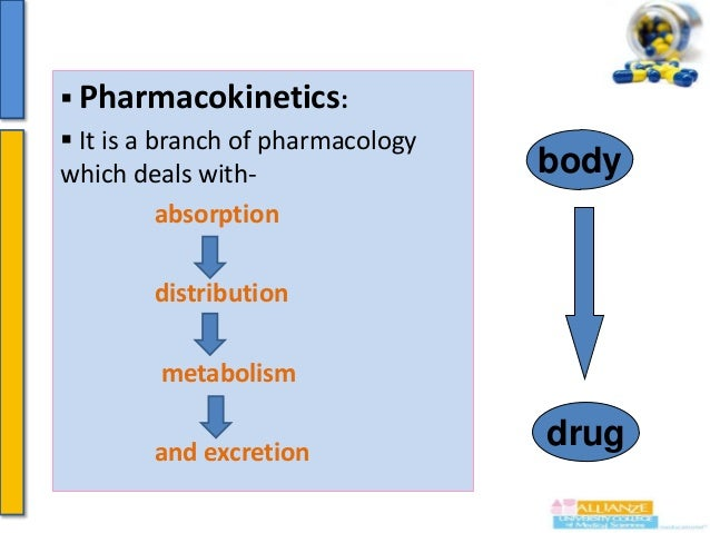 an overview of the process of drug metabolism and excretion