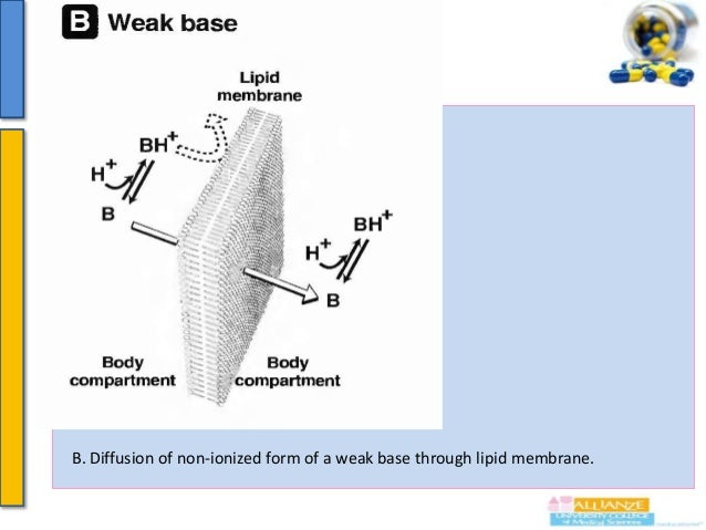 Importance of environment pH & drug pKa  Degree of ionization (polarity) depends on the pKa of drug (and pH of body fluid...