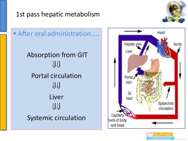 1st pass hepatic metabolism  Metabolism of drugs after absorption in the liver while passing through it before reaching s...