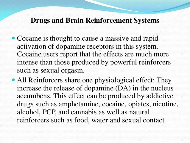 brain motivation incentive Pdf | in this paper the concept of incentive motivational salience is briefly  described, pioneering studies on the subject of the mesolimbic motivational  system.