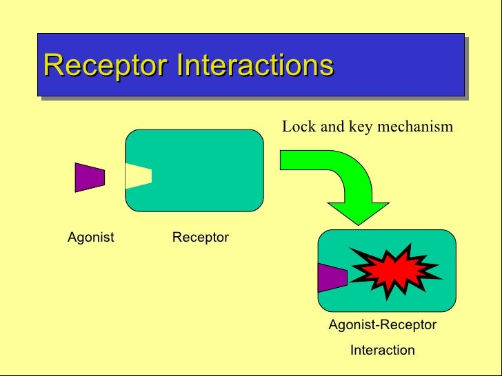 drug actions Mechanism of drug actions [sh4:p19 rd5:chp3] tier cccc transport protein ion channels enzymes receptors chemical chelating colligative counterfeit.