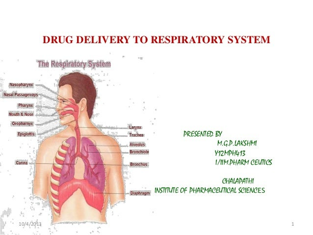 DRUG DELIVERY TO RESPIRATORY SYSTEM PRESENTED BY M.G.P.LAKSHMI Y12MPH413 I/IIM.PHARM CEUTICS CHALAPATHI INSTITUTE OF PHARM...