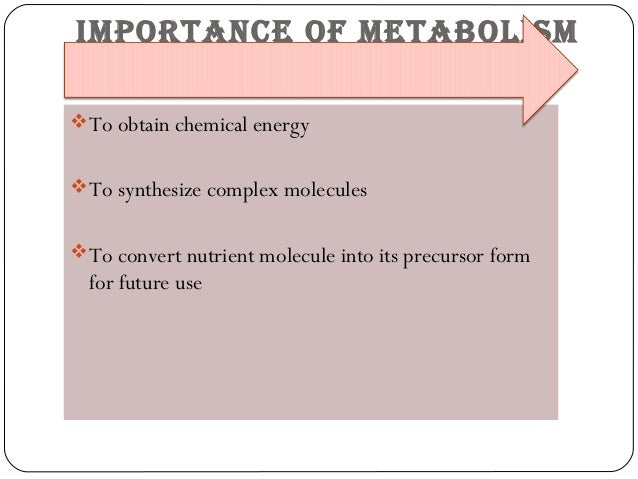 metabolismo tisular suplements