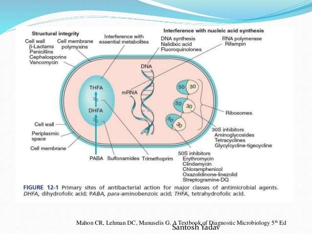 Drug resistance mechanism