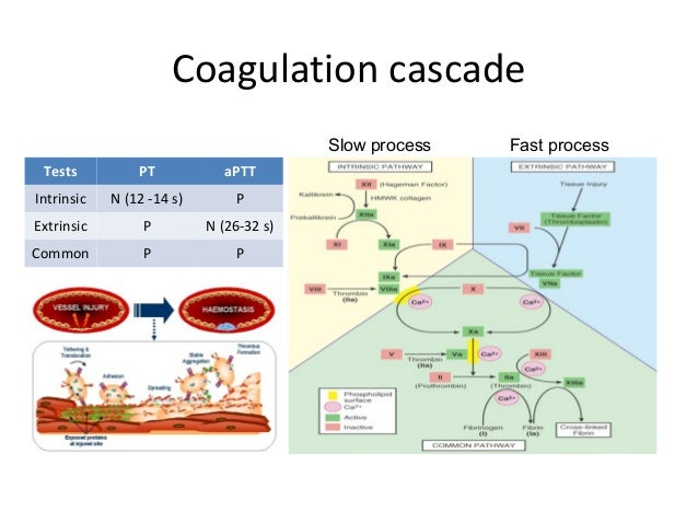 blood coagulation clotting process Coagulation factor testing is performed to determine if a person has enough coagulation activity to control the blood clotting process it is used by healthcare practitioners to determine if the level of a coagulation factor is low or absent (below the detectable limit) or if it is too high.
