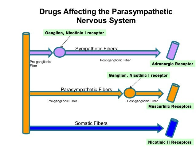 drugs the nervous system Psychoactive drug misuse as the nervous system tries to re-establish the homeostasis disrupted by the presence of the drug (see also, neuroplasticity.