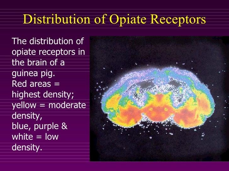 opiate receptors