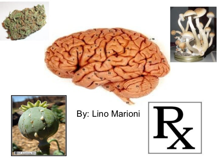 By: Lino Marioni  DRUGS AND THE BRAIN