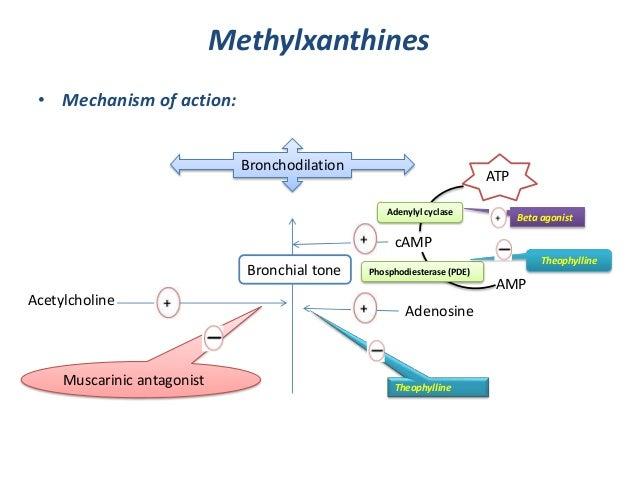 Methylxanthines• Mechanism of action:BronchodilationBronchial toneMuscarinic antagonistAcetylcholineAdenosineTheophyllinec...