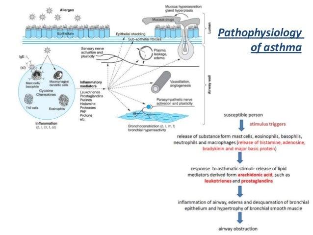 Pathophysiologyof asthma