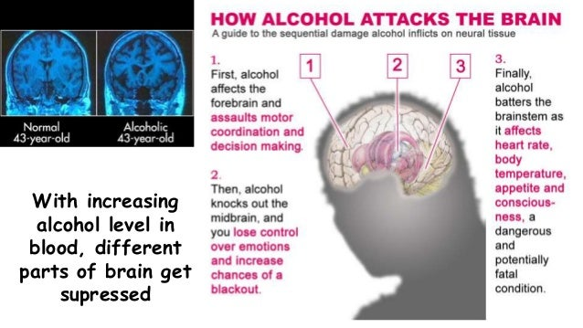 effects of alcohol on brain functioning In brief, the brain regulates your body's basic functions enables you to  of the  brain it powers our ability to think, plan, solve problems, and.