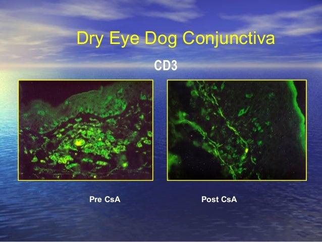 Cyclosporine Dog Dry Eye