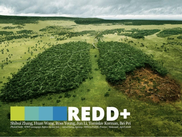 Why forests matter? Why deforestation?