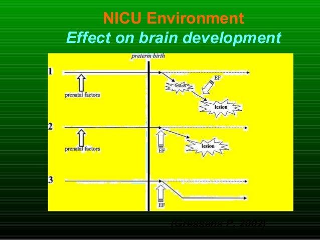 NICU Environment Effect on brain development (Gressens P, 2002)