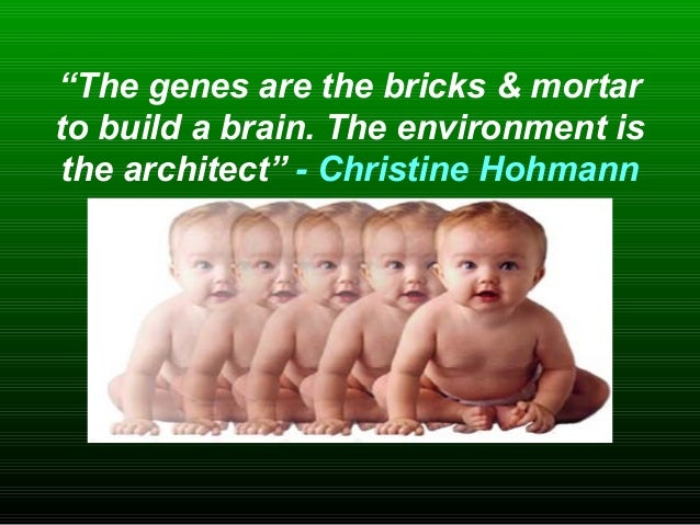 """""""The genes are the bricks & mortar to build a brain. The environment is the architect"""" - Christine Hohmann"""