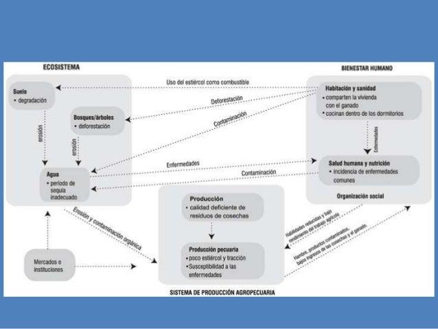 actividades mineras  mercurio  Deforestación, erosión de suelos  mercurio en el agua  mineros  Mercado del oro Políticas a...