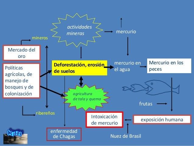 UN ENFOQUE ECOSISTEMA requiere •Transdisciplinariedad •Participación •Equidad • Requiere también una comprensión de contex...
