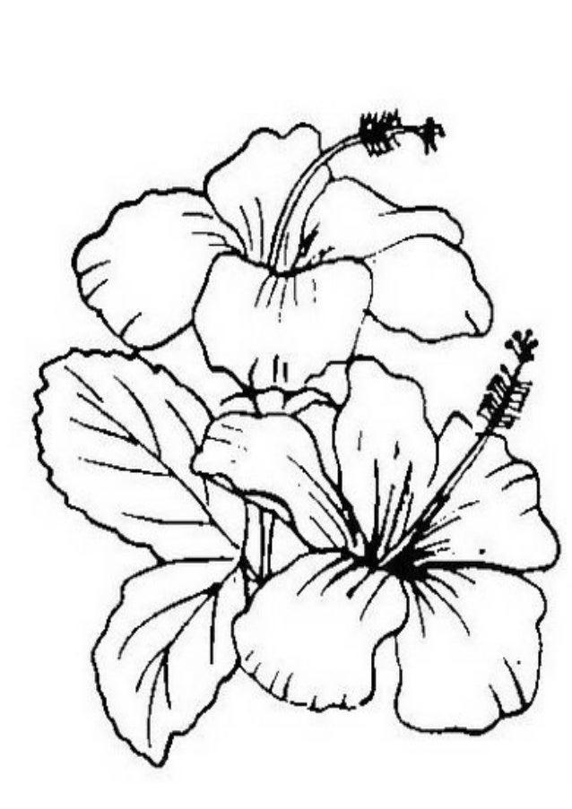Lukisan Gambar Bunga Raya Hitam Putih Cikimm Com