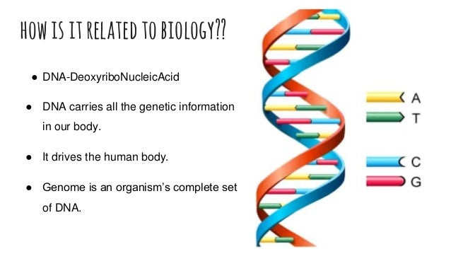 howisitrelated tobiology?? ● DNA-DeoxyriboNucleicAcid ● DNA carries all the genetic information in our body. ● It drives t...