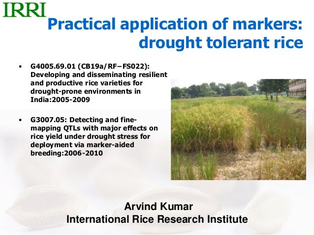 Practical application of markers:drought tolerant rice• G4005.69.01 (CB19a/RF−FS022):Developing and disseminating resilien...