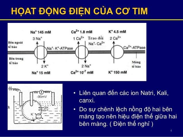 4 HỌAT ĐỘNG ĐIỆN CỦA CƠ TIM • Liên quan đến các ion Natri, Kali, canxi. • Do sự chênh lệch nồng độ hai bên màng tạo nên hi...