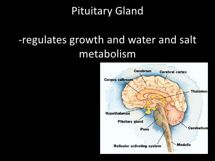 psychology notes brain Lecture 2 - foundations: this is your brain  this lecture reviews arguments explaining why materialism has become the predominant theory of mind in psychology.