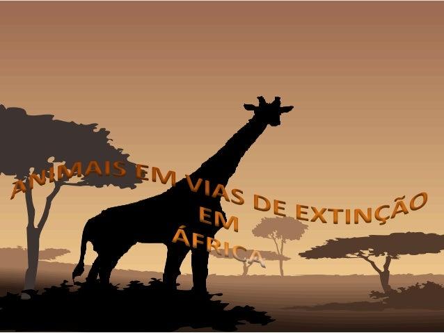 Introdução África é bem conhecida pela sua vida selvagem nas savanas e florestas. Existem cerca de 45 espécies de primatas...
