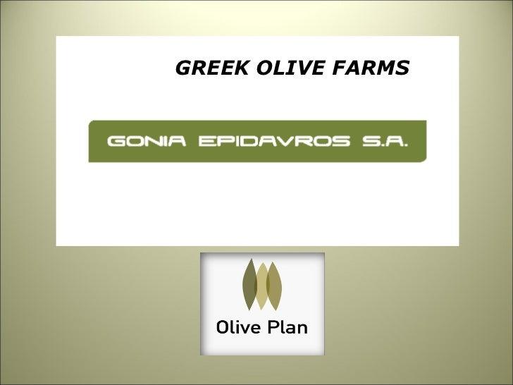 <ul><li>GREEK OLIVE FARMS </li></ul>