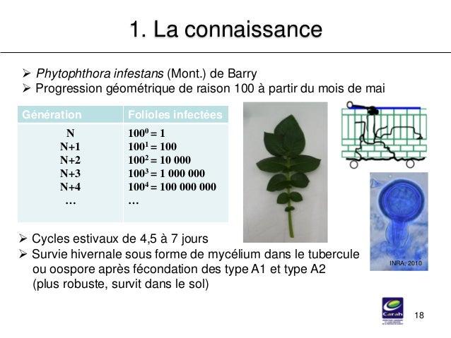 18 1. La connaissance  Phytophthora infestans (Mont.) de Barry  Progression géométrique de raison 100 à partir du mois d...