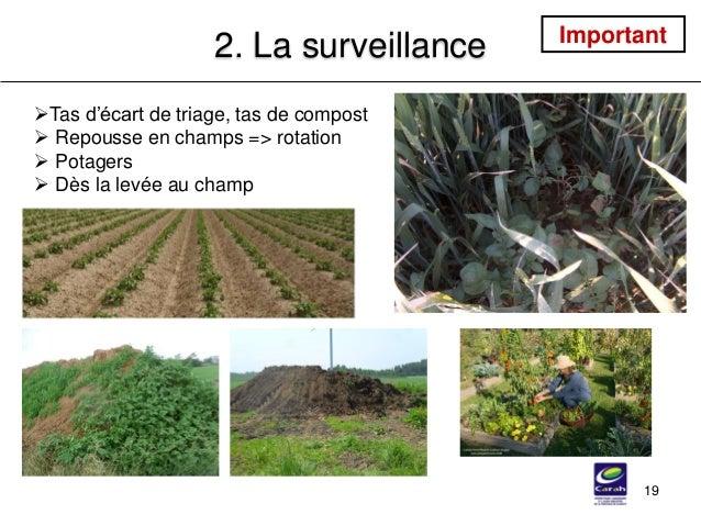 19 2. La surveillance Tas d'écart de triage, tas de compost  Repousse en champs => rotation  Potagers  Dès la levée au...
