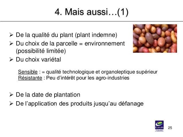 25 4. Mais aussi…(1)  De la qualité du plant (plant indemne)  Du choix de la parcelle = environnement (possibilité limit...